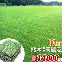 【送料無料】熊本県産高麗芝 天然芝 産地直送 芝生 天然芝 10平米 コウライシバ 熊本県産 高麗芝 お手入れ簡単 ガーデ…