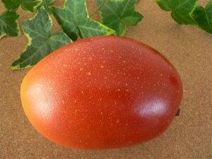 食品サンプル グッズ 宮崎マンゴ フルーツ 果物 お供え