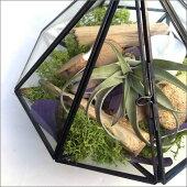 LED付きガラステラリウムアレンジフェイクグリーンエアプランツ植物フェイクグリーンミニ緑植物インテリアフェイクガラスジャーお洒落