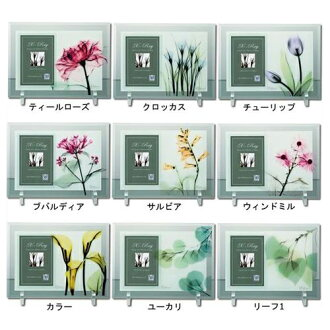 Photo frame photo frame X RAY flower leaf you power 24*17.5cm stylish gift interior miscellaneous goods mail order cinema collection