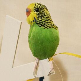 プエブコ PUEBCO ARTIFICIAL BIRDS バードオブジェBudgieセキセイインコ・グリーン /124070
