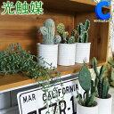 光触媒 観葉植物 フェイクグリーン サボテン インテリア 全5種 造花 ミニポット ミニグリーン 卓上 鉢 陶器 おしゃれ …