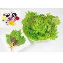 【在宅応援セット】洗わなくていい野菜 信州産 農薬不使用 野菜 新鮮 エディブルフラワー リーフレタス ベビーリーフ 直送 送料無料 全…