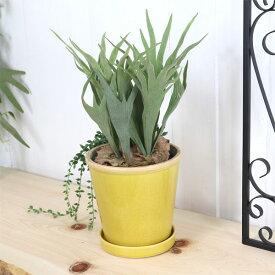 グロッシーポット ミモザ 鉢 底穴あり 黄色 yellow green glossy pot 5号サイズ