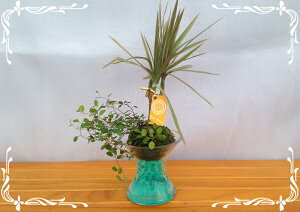 スパイラルグラス Φ9苔玉 ゼリーボール 2種寄せ植え ワイヤープランツ&トリカラー