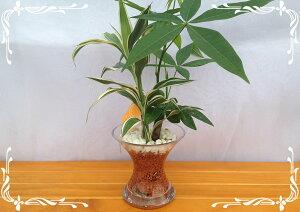 スパイラルグラス 茶瓦チップ 2種寄せ植え サンデリー&パキラ