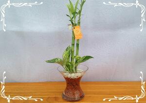 スパイラルグラス 茶瓦チップ 2種寄せ植え マーブルポトス&バンブー