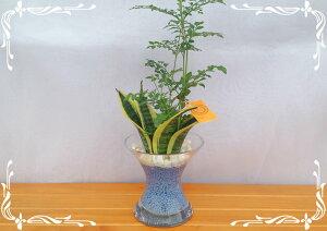 スパイラルグラス ネオコール 2種寄せ植え サンスベリア&トネリコ