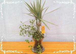 スパイラルグラス Φ9苔玉 炭 2種寄せ植え ワイヤープランツ&トリカラー