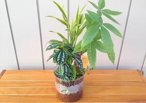 【ハイドロカルチャー】5号鉢 ハイドロボール4種寄せ植え