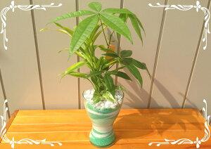 ハイドロカルチャー/スパイラルグラスLカラーサンド・3種寄せ植えパキラ・サンデリアーナ・マーブルポトス