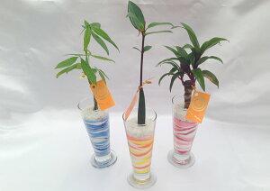 パフェグラス(小) 微粒カラーサンド3鉢セット