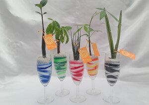 シャンパングラス 微粒カラーサンド5鉢セット