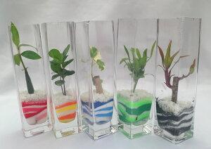 角 ロンググラス 微粒カラーサンド5鉢セット