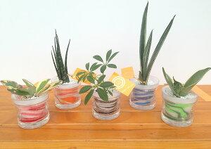 自動給水カップS 微粒カラーサンド5鉢セット