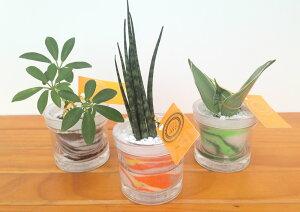 自動給水カップS 微粒カラーサンド3鉢セット