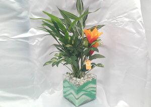 ハイドロカルチャー/キューブグラスLカラーサンドエメラルドウェーブ3種寄せ植えアレカヤシ・サンデリアーナ・フイリカポックアーティフィシャルフラワーハイビスカス付