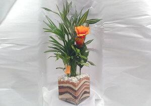 ハイドロカルチャー/キューブグラスLカラーサンドショコラウェーブ3種寄せ植えアレカヤシ・サンデリアーナ・フイリカポックアーティフィシャルフラワーハイビスカス付