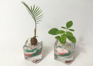 ハイドロカルチャーミニミニグラス2鉢セットカラーサンド 赤/緑