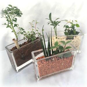 レクタングル 2種寄せ植えおまかせ3鉢セットハイドロカルチャー
