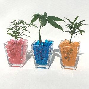 スクエアベースS ゼリーボール おまかせ3鉢セット【ハイドロカルチャー】【ミニ観葉植物】