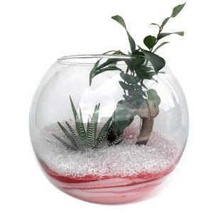 バブルボール18 アクアサンド2種寄せ植えガジュマル 12の巻 ハイドロカルチャー