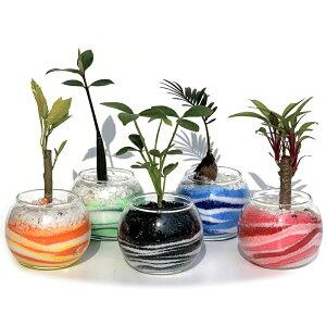【ハイドロカルチャー 観葉植物】バブルボール8 アクアサンド おまかせ5鉢セット