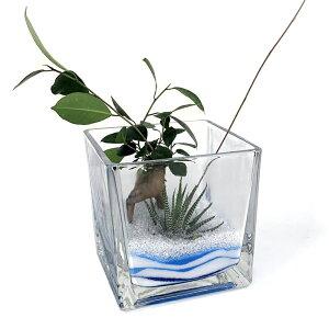 ブロック15グラス アクアサンド2種寄せ植えガジュマル 12の巻 ハイドロカルチャー