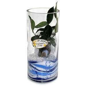 【ハイドロカルチャー 観葉植物】丸 シリンダーグラス 20cm アクアサンド 父の日ギフト