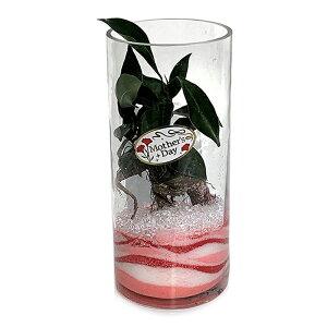 【ハイドロカルチャー 観葉植物】丸 シリンダーグラス20cm アクアサンド 母の日ギフト