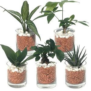 【ハイドルカルチャー 観葉植物】サークル80 茶瓦チップ 5鉢セット