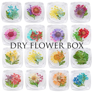 押し花クリスタルボックス 15種類 ドライフラワー 葉っぱ リーフ 小花 かすみ草 マーガレット ジェルネイル ネイル アクリル ハーバリウム アソート