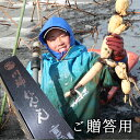 【送料込み】【ご贈答用】無農薬 加賀れんこん 加賀野菜蓮だより 川端れんこん(氷温保存)まるごと1本 ギフト箱入り…