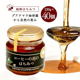 純粋はちみつ コーヒーの花のはちみつ (120g×40個)4800g/メル・ソルグルメシリーズ【送料無料】