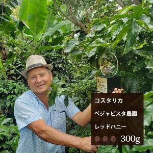 コスタリカ ベジャビスタ農園 レッドハニープロセス【300g】|珈琲 コーヒー 美味しい コーヒー豆 珈琲豆 スペシャルティコーヒー エスプレッソ コスタリカ