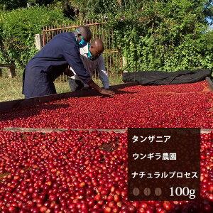 タンザニア ウンギラ農園ナチュラルプロセス【100g】|珈琲 コーヒー 美味しい コーヒー豆 高級 ブラック 自家焙煎 タンザニア 焙煎 珈琲豆 豆 エスプレッソ お試し