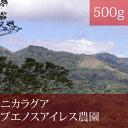 ニカラグアブエノスアイレス農園【500g】