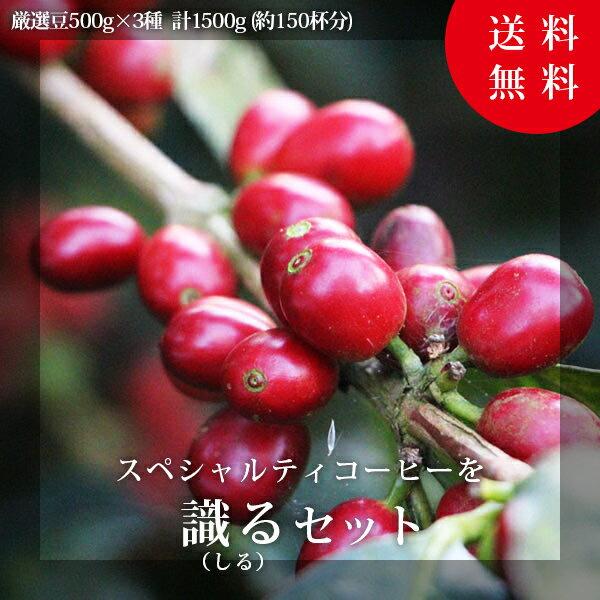 【500g×3パック】スペシャルティコーヒーを識るセット【コーヒー コーヒー豆】【ニキーニョ】