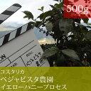 コスタリカベジャビスタ農園イエローハニープロセス【500g】