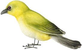ハンサ【HANSA】ぬいぐるみ小鳥 メジロ13cm
