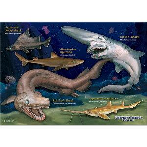【生物 ミュージアム ジグソーパズル 深海ザメ B5サイズ/330ピース】動物 ゲーム 魚類 サメ 鮫 深海生物 ラブカ