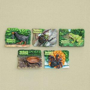 沖縄 やんばるの生物 3D マグネット (ヤンバルクイナ、ヤンバルテナガコガネ、リュウキュウヤマガメ、ヤシガニ、オキナワイシカワガエル)