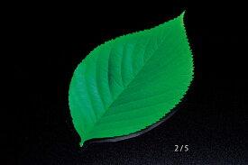 ミニクリアシート この葉(200枚入) 型抜きクリアシート キッチン 日本製 料理演出 和食料理 飲食店 ホテル 旅館