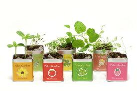 栽培セット Palm Garden 園芸 ガーデニング インテリア ギフト 室内 かわいい 栽培キット