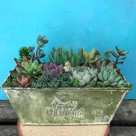 多肉植物 レクタングルブリキ鉢 寄せ植え 退職 新築 開店 祝い ギフト プレゼント 鉢植え 花