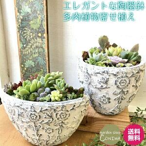 多肉植物 ダイナスティ陶器鉢 寄せ植え 誕生日 母の日 父の日 退職 新築 開店 引っ越し 祝い ギフト プレゼント 送料無料 鉢植え 花 おしゃれ