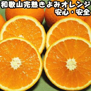 清見 きよみ 和歌山 有田 完熟 清見オレンジ 10kg 贈答用 送料無料 甘い 糖度 清見タンゴール みかん 10kg ギフト 箱 買い お取り寄せ 清美オレンジ