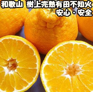 デコポン 同品種 不知火 贈答用 5kg 送料無料 和歌山 有田柑橘さんさん 樹上完熟 甘い でこぽん 5kg ギフト しらぬい