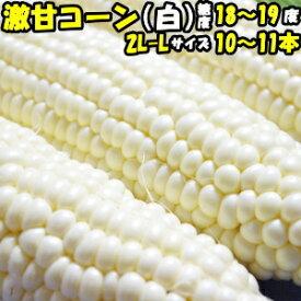 とうもろこし ピュアホワイト 送料無料 生で食べれる 白いとうもろこし 糖度18〜19度 香川 三豊産 トウモロコシ 2L-Lサイズ 10本-11本 送料無料 父の日
