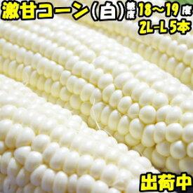 とうもろこし ピュアホワイト 送料無料 生で食べれる 白いとうもろこし 糖度18〜19度 香川 三豊産 トウモロコシ 2L-Lサイズ 混合 5本入り 父の日